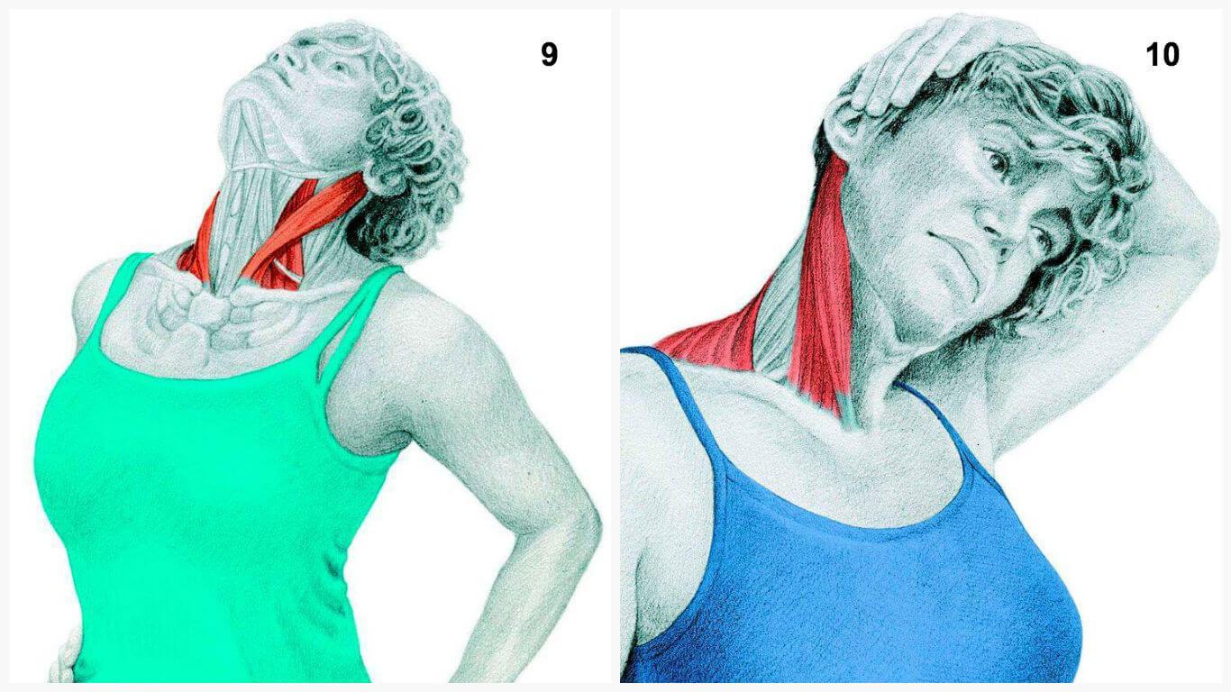 как расслабить мышцы шеи упражнения с фото них