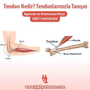 tendon nedir